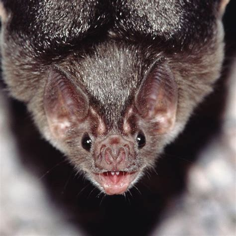 Bat Facts For Kids  Bats Diet And Habitat. Subscription Management Software. Online Classes At Ohio State. Auto Loan Refinancing Companies. What To Use To Get Rid Of Mold