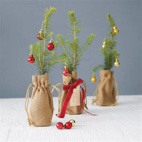 norway spruce christmas tree contemporary