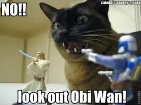 wars cats cat wars dump a day