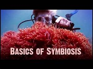 Symbiosis: Mutualism, Commensalism, and Parasitism - YouTube