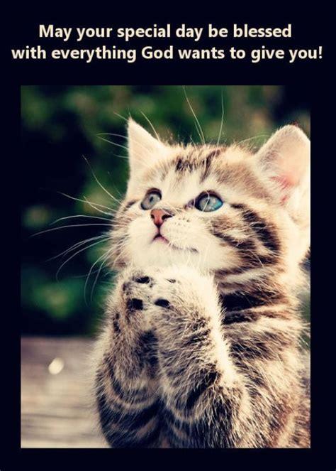 birthday wishes  kitten  animais bonitos gatos de