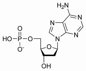 Basic Chemical Makeup Of Lipids