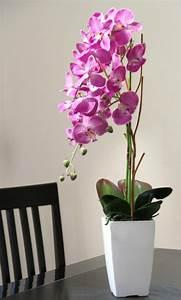 Orchidee fuchsia en pot blanc sur orchidees for Salle de bain design avec décoration fleur artificielle boutique en ligne