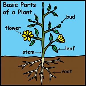 Ms  M U0026 39 S Star Students  Parts Of A Plant