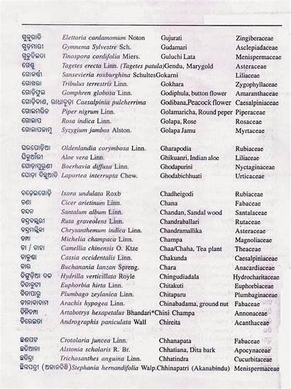 Names Alphabetical Botanical Odisha Plants Common Alphabetically