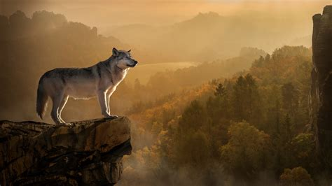 Find the best wolf hd wallpaper on getwallpapers. Wolf 4K wallpapers for your desktop or mobile screen free and easy to download
