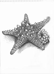 starfish by evelyn-n on DeviantArt