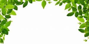 葉っぱ・草木のイラスト・フリー素材/フレーム枠No.142『緑のカーテン・葉』