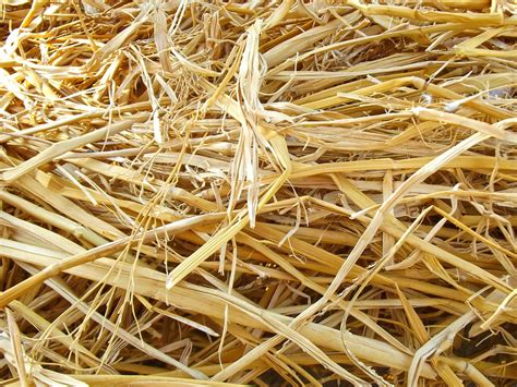 Hay Dried Up Natural · Free Photo On Pixabay