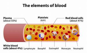 Basic Things You Need To Know About Blood And Blood Groups
