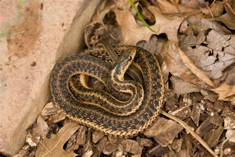 Our Brains Evolved to Recoil at the Sight of Snakes ...