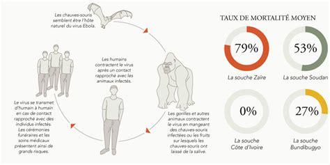 bureau en gros souris virus ebola transmission traitement pays concernés le