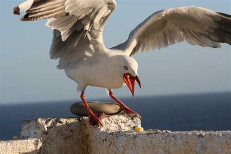seagulls halt barry development