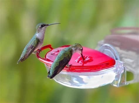 little gem window hummingbird feeder
