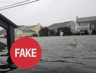 Fake Sandy Gifs Hurricane Sharks Fakes Jersey