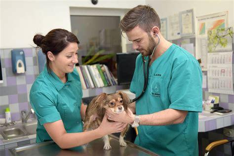 Photo 36 - Dr. Beinerta veterinārās klīnikas Rīgā un Salaspilī