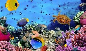Free 3D Nature Live HD Wallpaper APK Download For Android ...