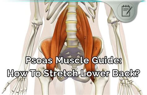 The best quality psoas stretch for low back pain review