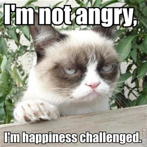Funny Angry Cat Meme - the best of grumpy cat 45 pics