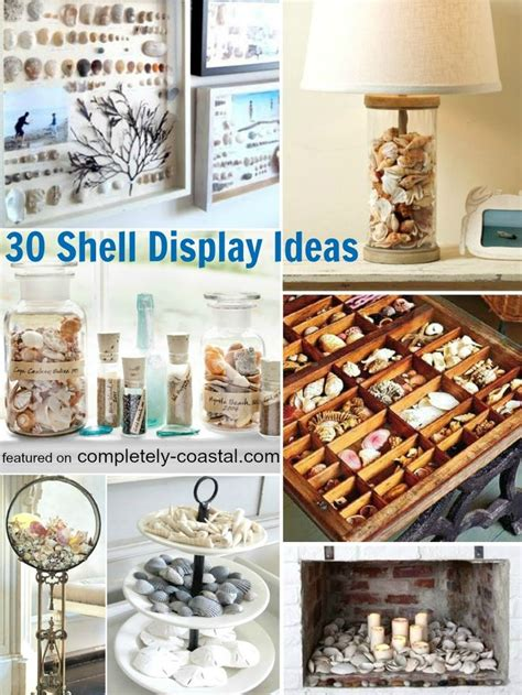 how to display shells ideas best 25 seashell display ideas on pinterest display sea shells seashell projects and