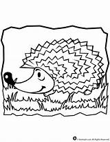 Coloring Hedgehog Pages Animal Print Pig Giraffe sketch template