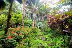 Botanical gardens hilo zip line garden ftempo for Hilo botanical gardens