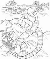 Coloring Snake Desert Pages Printable Animals Sahara Python Drawing Sea Animal Snakes Tiger Burmese Realistic Dessert Template Sonoran Getdrawings Reptile sketch template