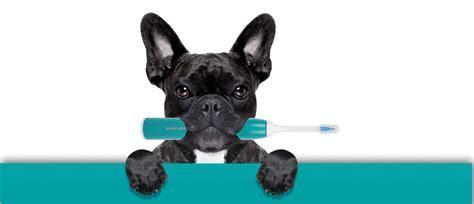 Ultraschall Zahnbürsten Für Hunde