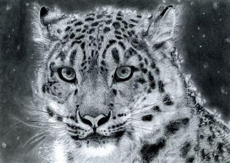 snow leopard canvas pictures wild animal black white