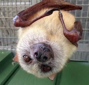 No, Bats Do Not Make Good Pets – Koryos Writes