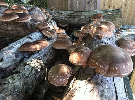 growing mushrooms mushroom cultivation good books for aussies milkwood courses skills for real lifemilkwood