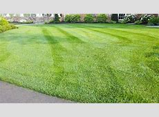 Tall Fescue Grass Planting – Decor References