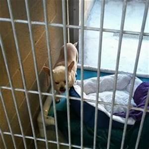 Orange County Humane Society - 18 Photos & 59 Reviews ...