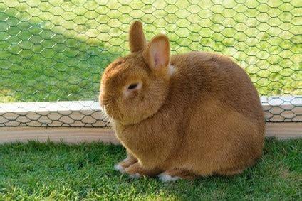 kaninchen außengehege bauanleitung kaninchengehege bauen anleitung bauanleitung kaninchengehege selber bauen kaninchengehege