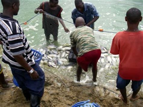 strong potential  fish farming  africa