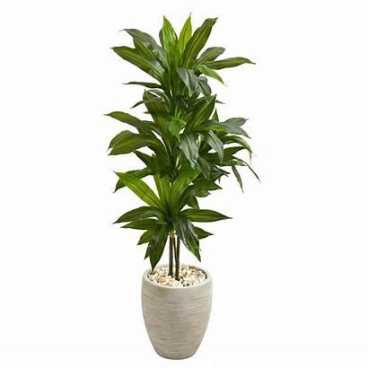 Artificial Plants Plant Planter Natural Indoor Sand