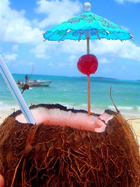 monkeys   coconut trees