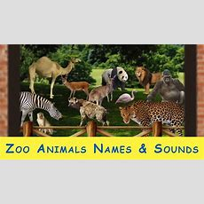 Learn Zoo Animals Names And Sounds For Kids Youtube