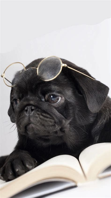 Pick the cutest dog images and download for free for your phone, desktop or website. Pug Puppy Wallpaper (66+ images)