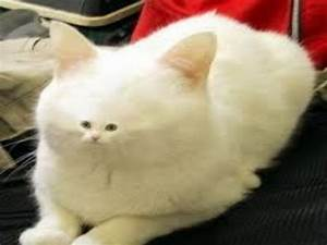 Download funny ... Funny Cat Videos