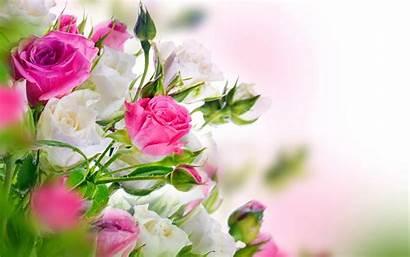 Roses Desktop Rose Wallpapers Bouquet Background Hosting