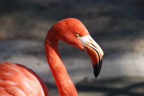 stock photo  animal bird flamingo