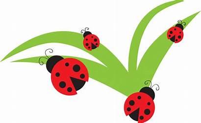 Clip Bug Clipart Flower Ladybug Lady Pink