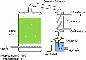 Steam Distillation Schematic Of Nepeta Cataria To Extract Its Essential