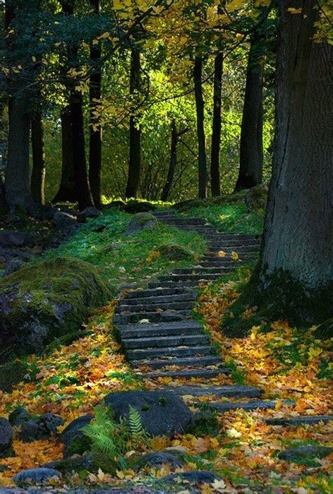 astonishing   paths   forest