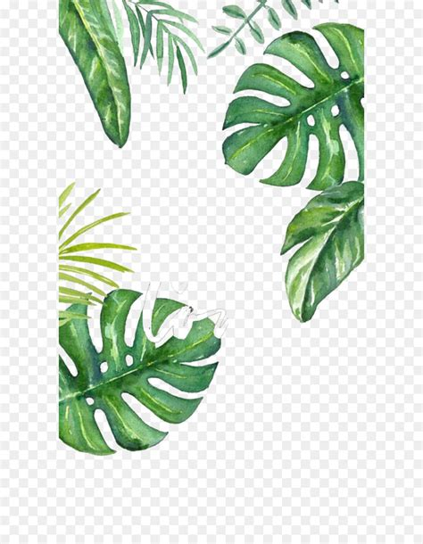 banana leaf wallpaper hand painted turtle bamboo png