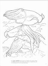 Coloring Cuttlefish Getcolorings Coral Printable Reef sketch template