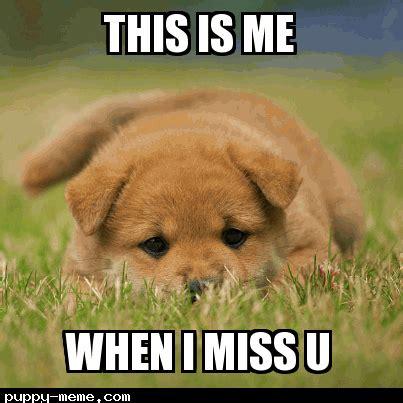 Sad Dog Meme - sad puppy meme