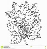 Coloring Peony Flowers Flower Adults Awesome Peonies Viatico Amazing sketch template
