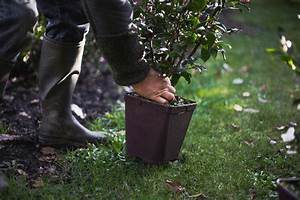 Comment Planter Un Camélia : comment planter mon arbuste in my french garden ~ Melissatoandfro.com Idées de Décoration